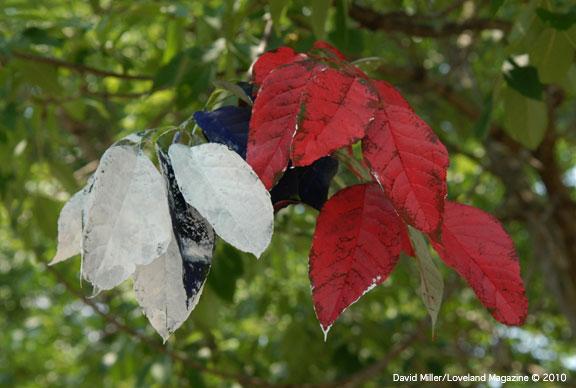 Leaves-pt