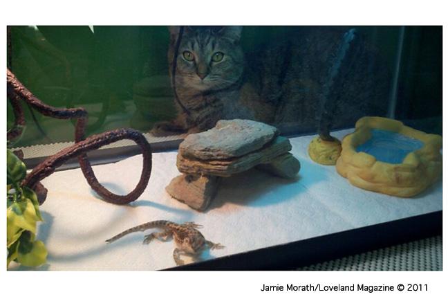 Jamie-cat-liz