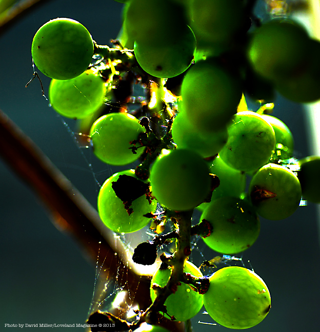 Granny-grapes