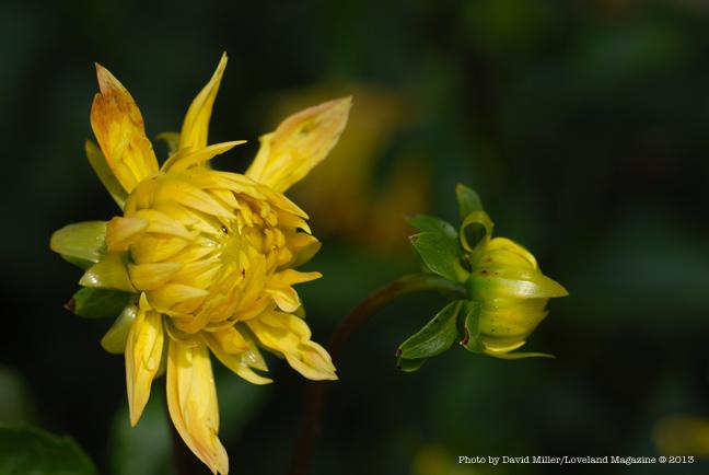 Granny-flower-e