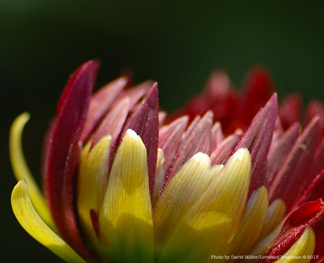 Granny-flower-d