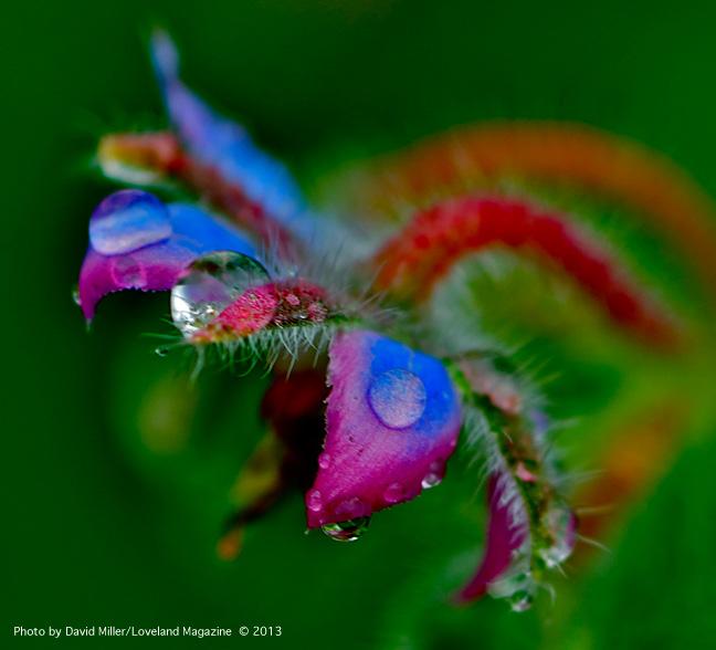 Granny-flower-w_bubbles