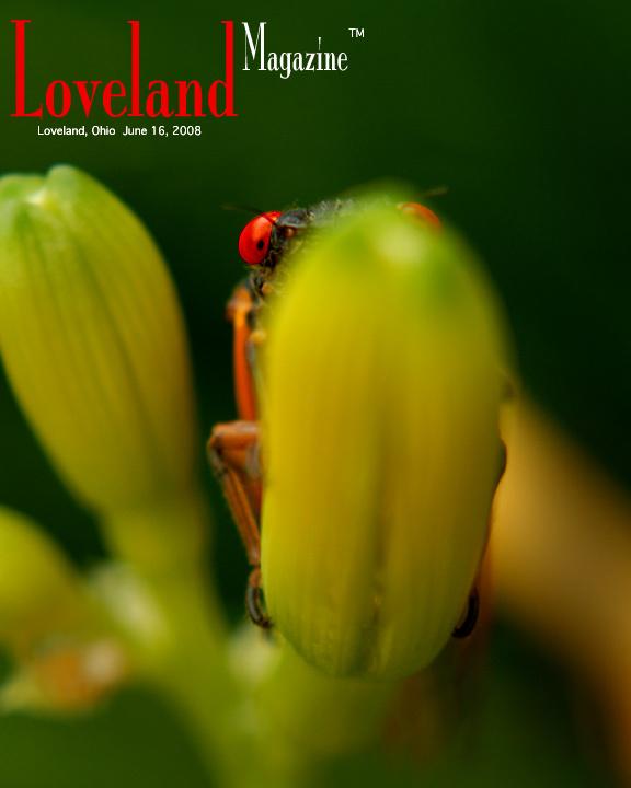 Cicadacover