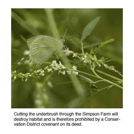 Butterflysimpsonfarm_1