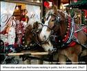 Horse_neck