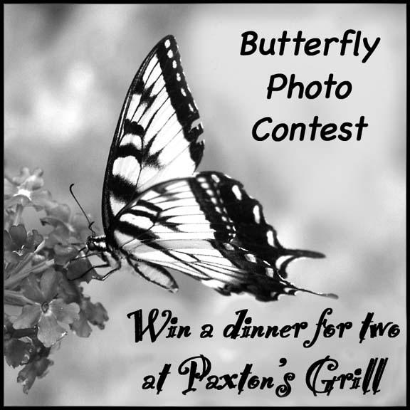 photo_contest
