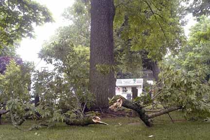 tree_damage