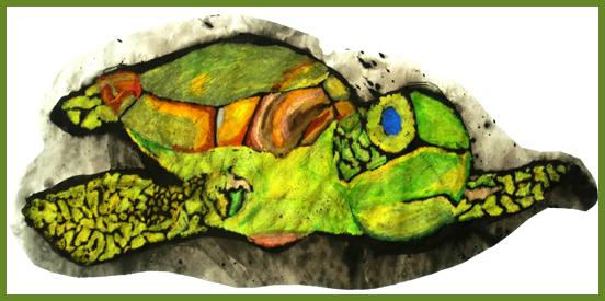 turtle8298